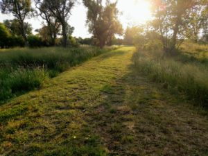 A mowed section of grass indicates the path to take into the trees ahead. The sun shines in the distance, but you can't see the destination.