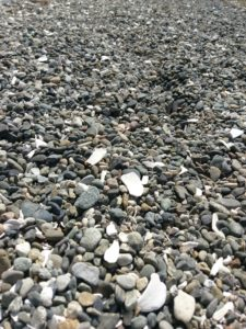 Rocks and seashells of various shades of gray and white cover this beach in Washington.